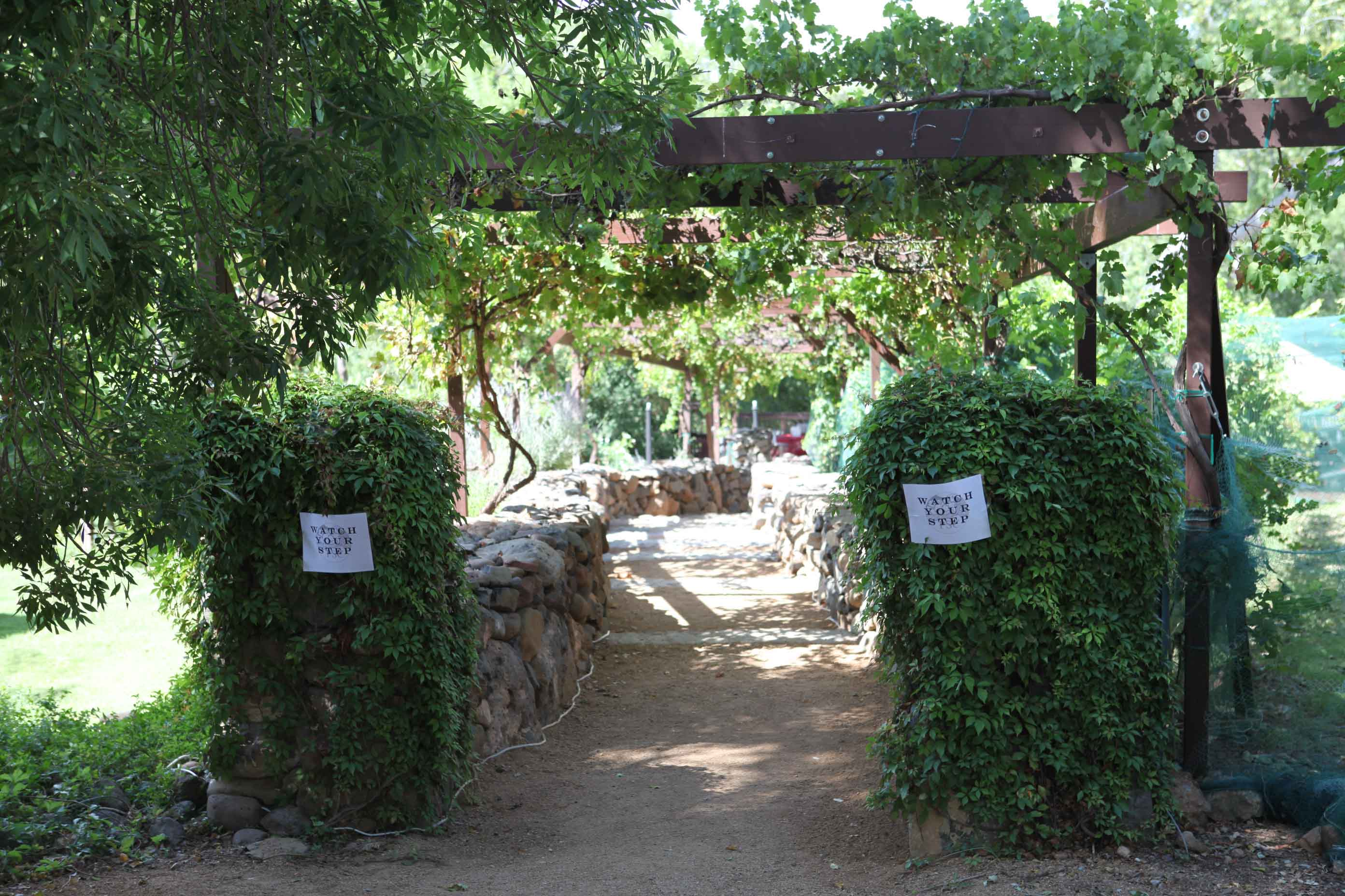 Vine covered pergola & Page Springs Cellars | Weekly Wine Journal