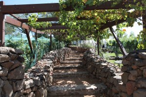 Vine covered pergola