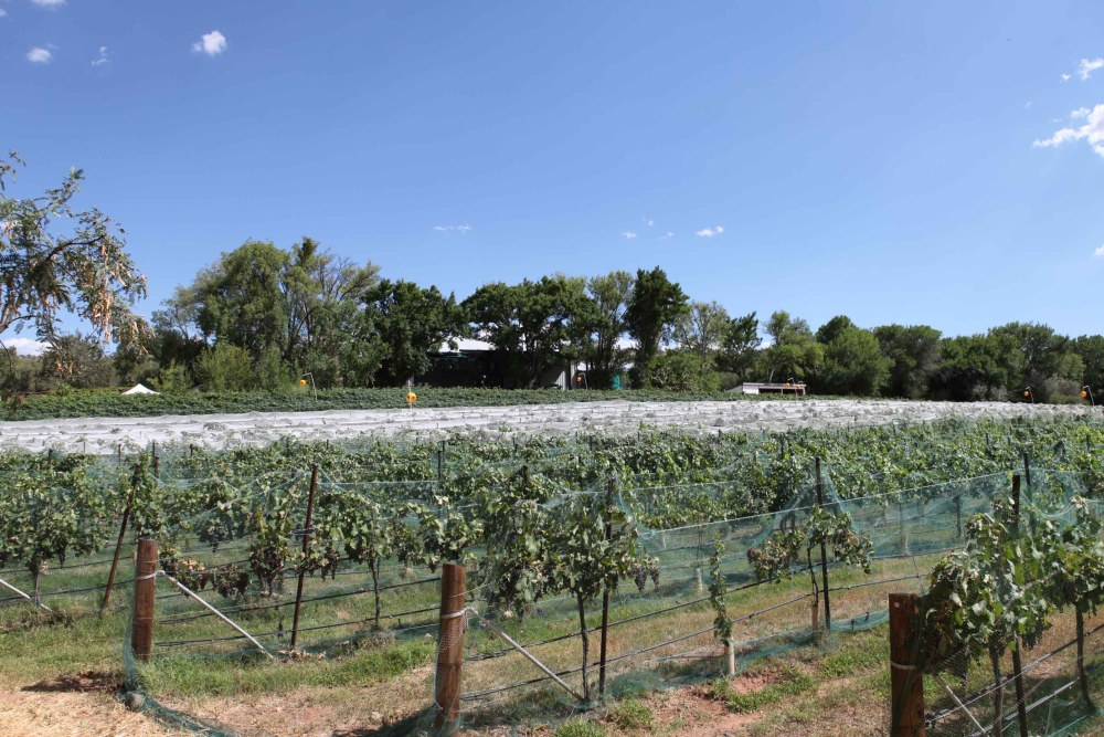 Pursuing The Dream:  The Costs Associated with Buying a Winery and Vineyard (2/3)