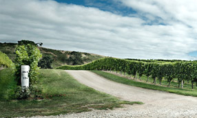 Brancott estate wine