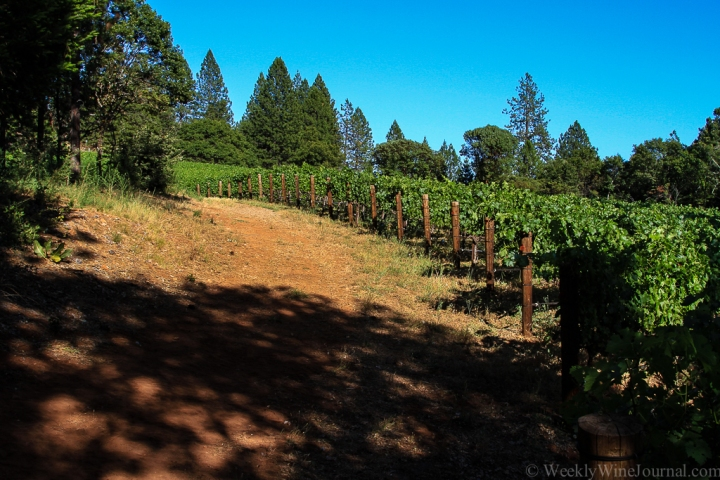 Red Cap Vineyards on Howell Mountain