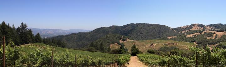 Cain-vineyard